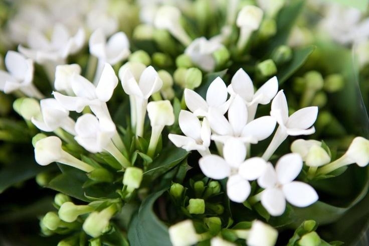 høstbryllup blomster
