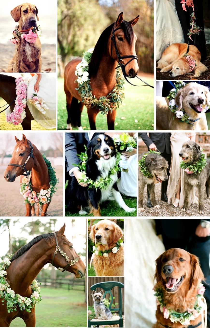 dyr i bryllup
